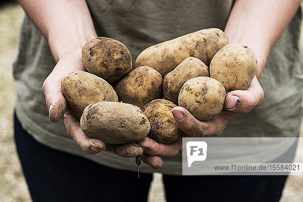 Hochwinkel-Nahaufnahme einer Person  die im Frühjahr Kartoffeln zum Pflanzen hält.