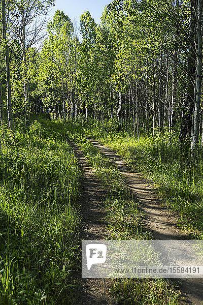 Trail through lush forest in Sun Valley  Idaho  USA