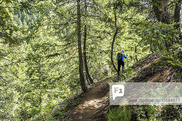 Woman hiking through forest in Sun Valley  Idaho  USA