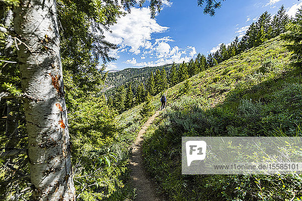 Woman hiking by forest in Sun Valley  Idaho  USA