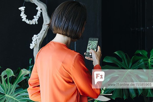 Businesswoman taking photograph of plant in office