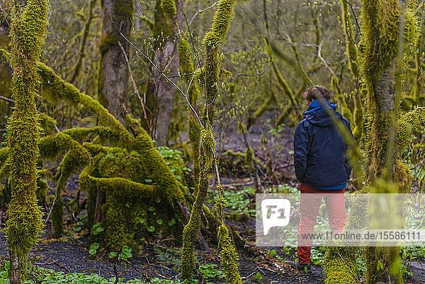 Mann erforscht feuchten  moosbedeckten Wald  Howe Sound  Kanada