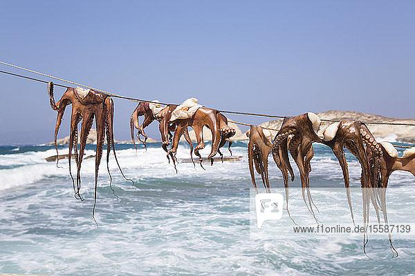 Drying Octopus  Mandrakia Village  Milos Island  Cyclades Group  Greek Islands  Greece