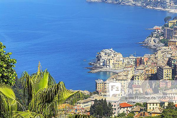 Elevated view of Camogli and Gulf of Paradise  Camogli  Riviera di Levante  Liguria  Italy
