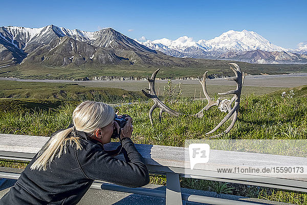 A female visitor to Denali National Park and Preserve takes a photo of Denali at the Eielson Visitor Center  with caribou antlers in the foreground; Alaska  United States of America