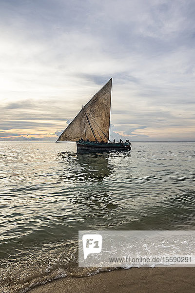 Dhows on the Indian Ocean at sunset; Zanzibar City  Unguja Island  Zanzibar  Tanzania