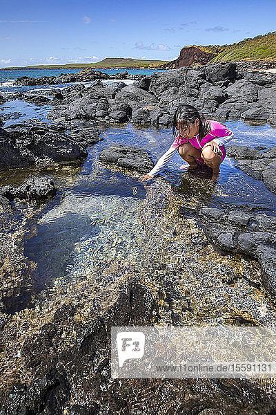 A young girl examines life in a tide pool beside Kawakiu Nui Beach on Molokai's West End; Molokai,  Hawaii,  United States of America