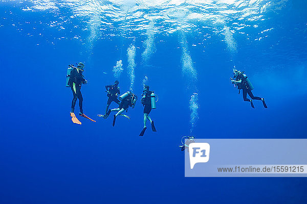 Divers pictured hanging at 15 feet for a decompression stop before surfacing off the Backwall at Molokini Marine Preserve  off Maui; Hawaii  United States of America