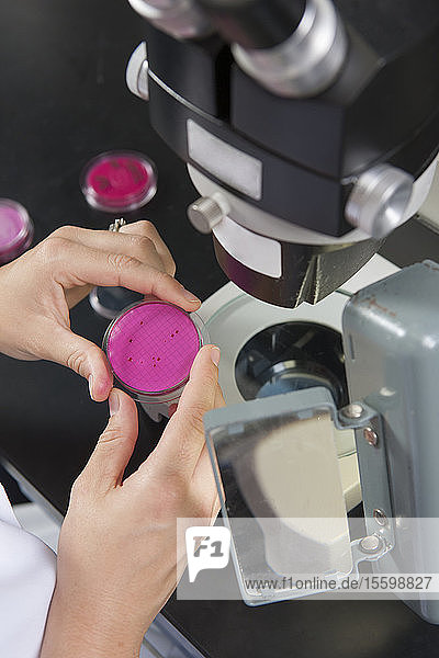 Laboratory scientist reviewing bacterial culture in water treatment lab