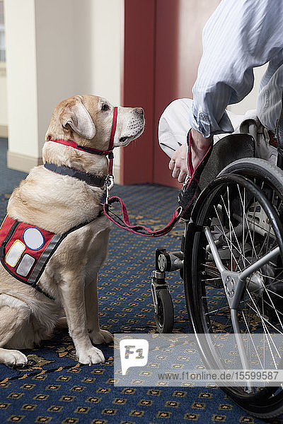 Service dog with a man in a wheelchair with a Spinal Cord Injury at an elevator