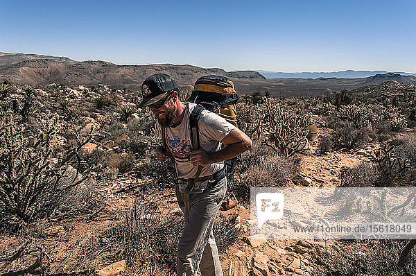 View of adventurous young man hiking in desert  Red Rock National Park  Nevada  USA