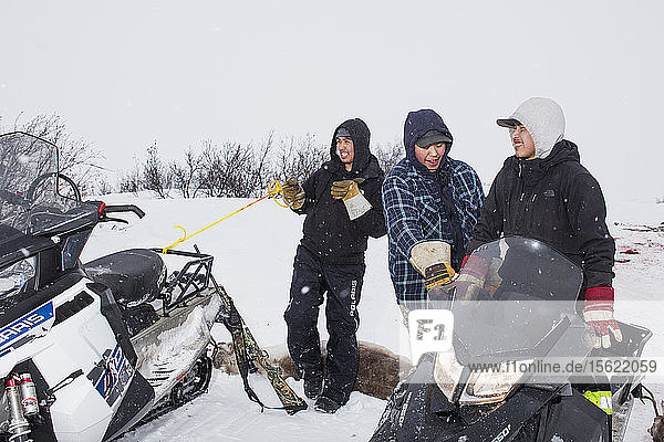 Gwich'in subsistence hunters harvest caribou outside Fort McPherson  Northwest Territories  Canada  March 17  2016.