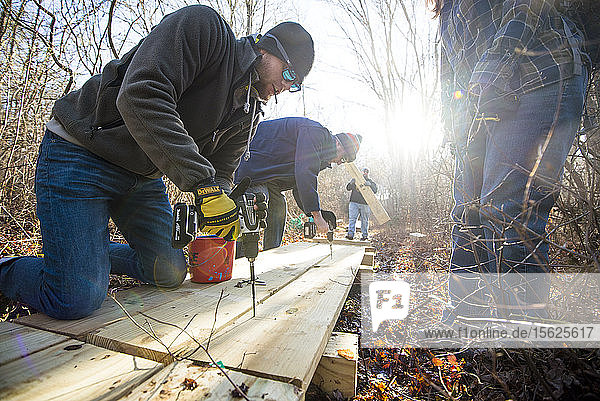 Volunteers using drills while working together to build a boardwalk as part of a nature trail with The Nature Conservancy  Little Compton  Rhode Island  USA