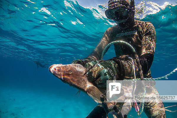 Diver catching margate fish (of grunt family) while spearfishing in ocean  Clarence Town  Long Island  Bahamas