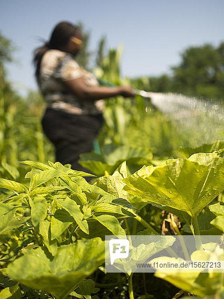 Women watering plants at Manton Bend Community Garden in Providence  Rhode Island.
