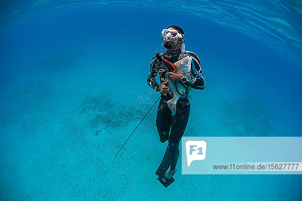 Diver surfacing with caught hogfish while spearfishing in ocean  Clarence Town  Long Island  Bahamas