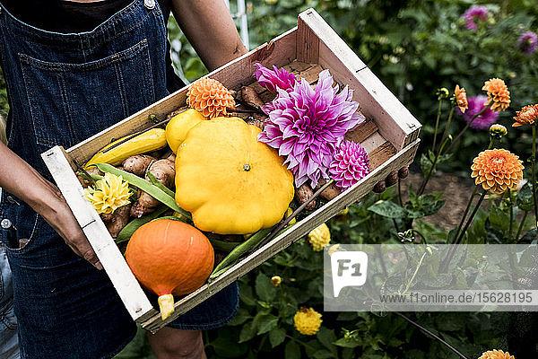 Hochwinkel-Nahaufnahme einer Person  die eine Holzkiste mit frischem Gemüse und geschnittenen rosa Dahlien hält.