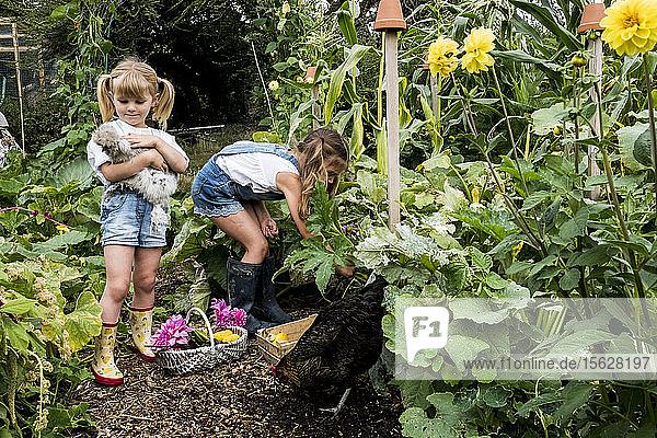 Zwei Mädchen stehen in einem Garten  halten Hühnchen und pflücken Gemüse.