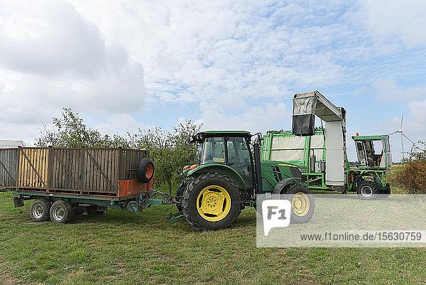Apfelernte auf einer Plantage  Erntemaschine zur Automatisierung