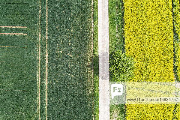 Deutschland  Bayern  Regensburg  Luftaufnahme einer leeren Landstraße entlang eines Rapsfeldes im Sommer