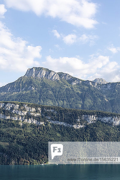 Schweiz  Gersau  Schwyz  Blick auf hohe bewaldete Klippe im Sommer