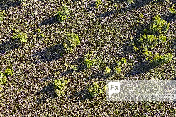 Luftaufnahme von Bäumen auf Waldland  Dietramszell  Deutschland