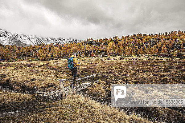 Hiker walking through alpine plateau in autumn  Sondrio  Italy