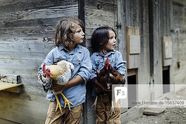 Zwei Kinder halten Hühner auf einem Biobauernhof Zwei Kinder halten Hühner auf einem Biobauernhof