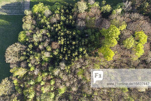 Luftaufnahme von im Wald wachsenden Bäumen  Dietramszell  Deutschland