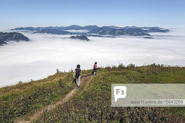 Wanderer auf Wanderweg vom Fellhorn zum Schlappoldkopf  hinten Nebel über dem Alpenvorland  bei Oberstdorf  Oberallgäu  Allgäu  Bayern  Deutschland  Europa