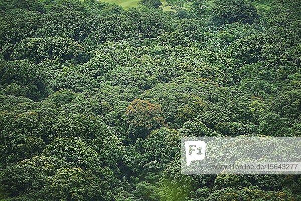 Regenwald am Nu'uanu Pali Lookout  Nu'uanu Pali  Honolulu  Hawaiianische Insel Oahu  O'ahu  Hawaii  Aloha State  USA  Nordamerika