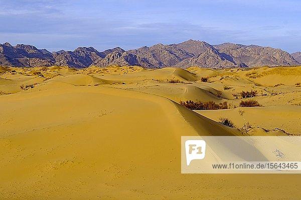 Sanddünen von Elsen Tasarkhai  Bulgan Aimag  Bulgan Provinz  Mongolei  Asien