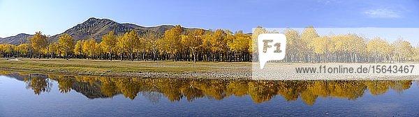 Panorama  herbstlich gefärbte Bäume spiegeln sich im Fluss Tuul am Eingang zum Gorchi-Tereldsch-Nationalpark  Ulan Bator  Mongolei  Asien