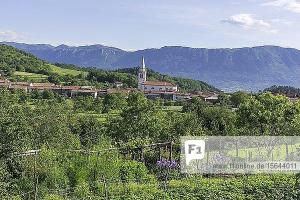 Blick auf den Weinort  Goce  Slowenien  Europa