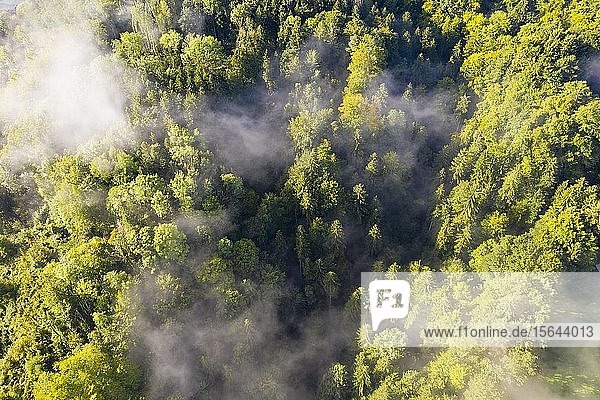 Luftaufnahme  Wald mit Nebelschwaden  Oberbayern  Bayern  Deutschland  Europa