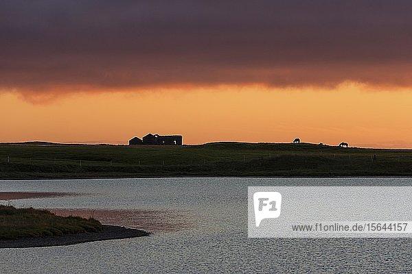 Sonnenuntergang  hinten Pferde und Hausruine  bei Grundarfjördur  Halbinsel Snaefellsnes  Island  Europa