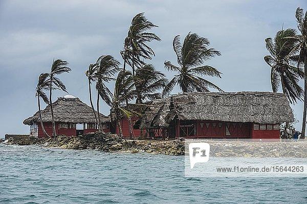Traditionelle Hütten unter Palmen  Achutupu  San Blas Inseln  Kuna Yala  Panama  Mittelamerika