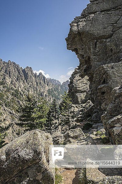 Bergmassiv mit felsigen Bergspitzen und Kiefern  Col de Bavella  Bavella-Massiv  Korsika  Frankreich  Europa