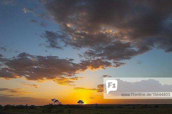 Sonnenuntergang  Masai Mara National Reserve  Kenia  Afrika