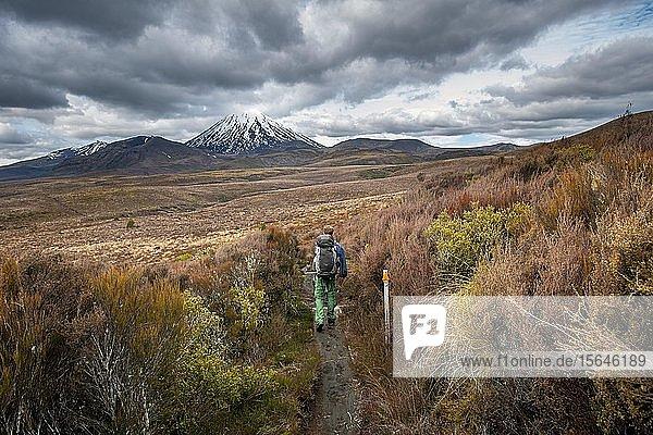 Wanderer auf Wanderweg Tongariro Northern Circuit  New Zealand Great Walks  Vulkan Mount Tongariro und Mount Ngauruhoe  Tongariro National Park  Nordinsel  Neuseeland  Ozeanien
