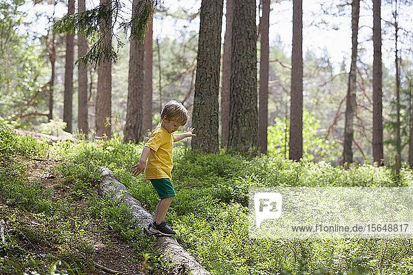 Junge erkundet Wald  Finnland