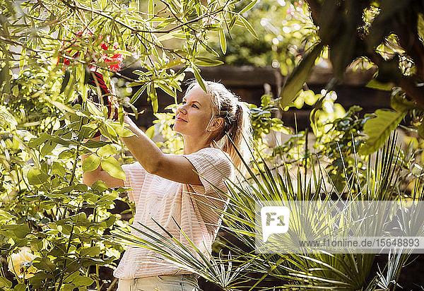 Frau beschneidet Blumen im Garten