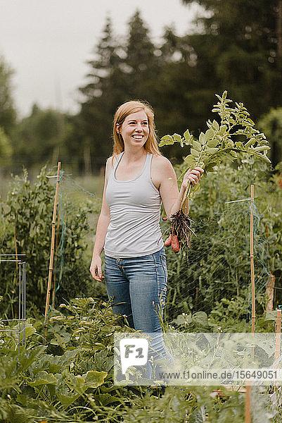 Frau hält Kartoffelbüschel im Schrebergarten