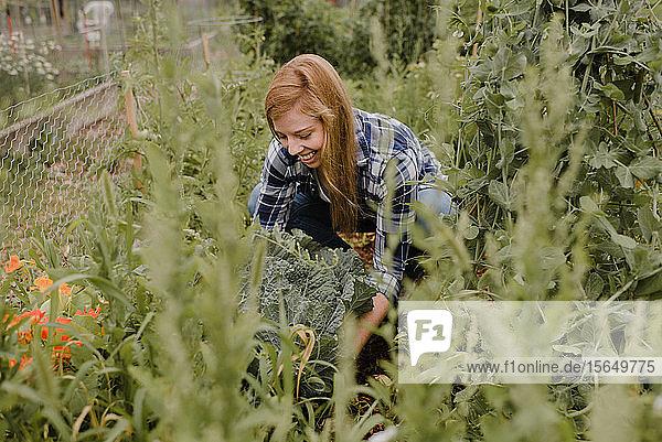Frau gärtnert im Kleingarten