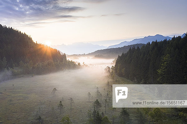Sun rays at sunrise on fog covering the wetland of Pian di Gembro Reserve  aerial view  Aprica  Valtellina  Lombardy  Italy