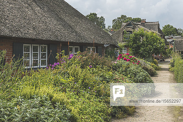 Footpath by plants and houses in Gothmund village  Lübeck  Germany