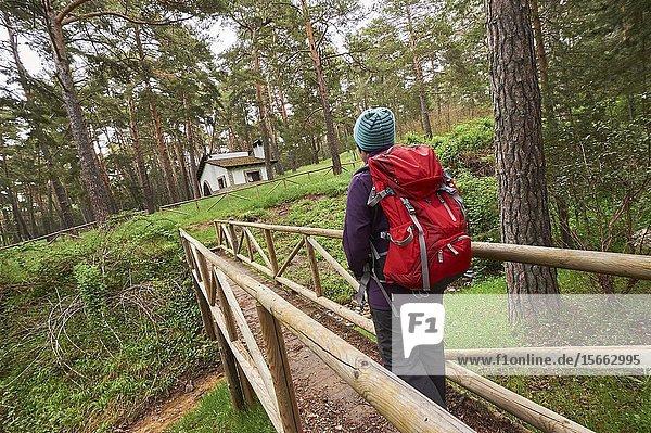 Woman with red backpack hiking along Pinus Sylvestris forest near Espineda Refuge in Checa  in Alto Tajo Natural Park  (Guadalajara Province  Castilla- La Mancha Region  Spain)