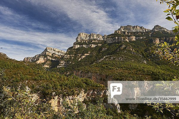 Pyrenean forest and mountains in Añisclo Canyon  Ordesa and Monte Perdido National Park  Huesca province  Aragon (Spain)