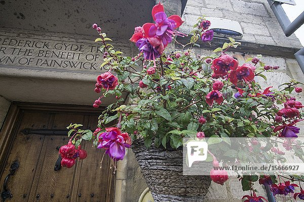 PAINSWICK ENGLAND ON OCTOBER 12  2019: One of the most beautiful villages in the Cotswolds. Fuchsia flowers.