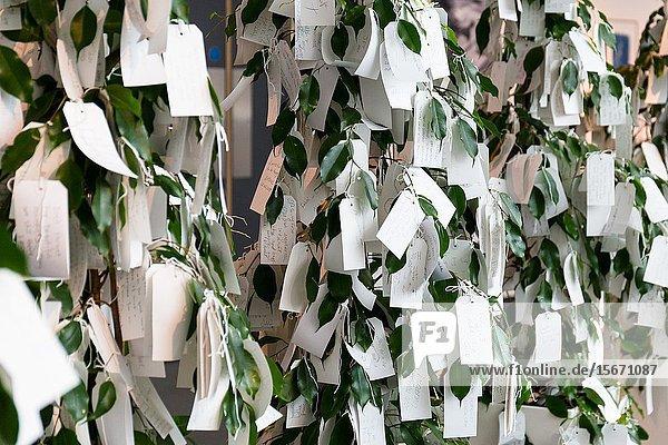 Wish tree for Liverpool. Yoko Ono. Liverpool Museum pierhead Liverpool waterfront. Enngland.